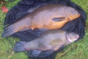 10lb 1oz Tench from Lay-by Pit