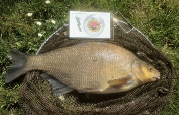 John Byers has a near personal best Bream from the Lay-by Pit