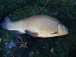 clubpit_tench_6may14